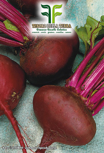Table Beet purple of Egypt