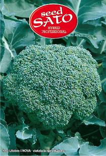 Cabbage Broccoli Hybrid Marathon