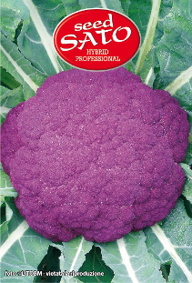 Vasco Violet Cauliflower Hybrid