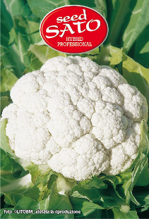 Cauliflower White Devina Hybrid
