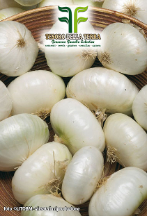 White Onion Aprilatica