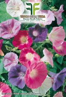 Ipomea Grandiflora in Miscuglio