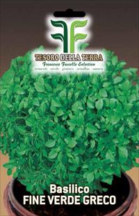 Albahaca fino verde griego