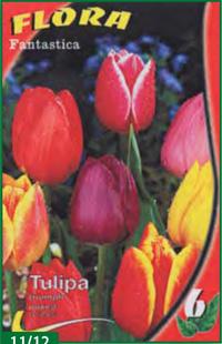 Triumph Tulips