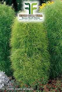 Kokia Tricophylla