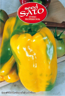 Quadrus Yellow Pepper Hybrid (sweet)