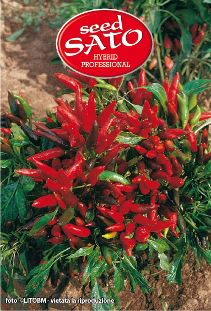 Vesuvius Hot Pepper F1 (spicy)
